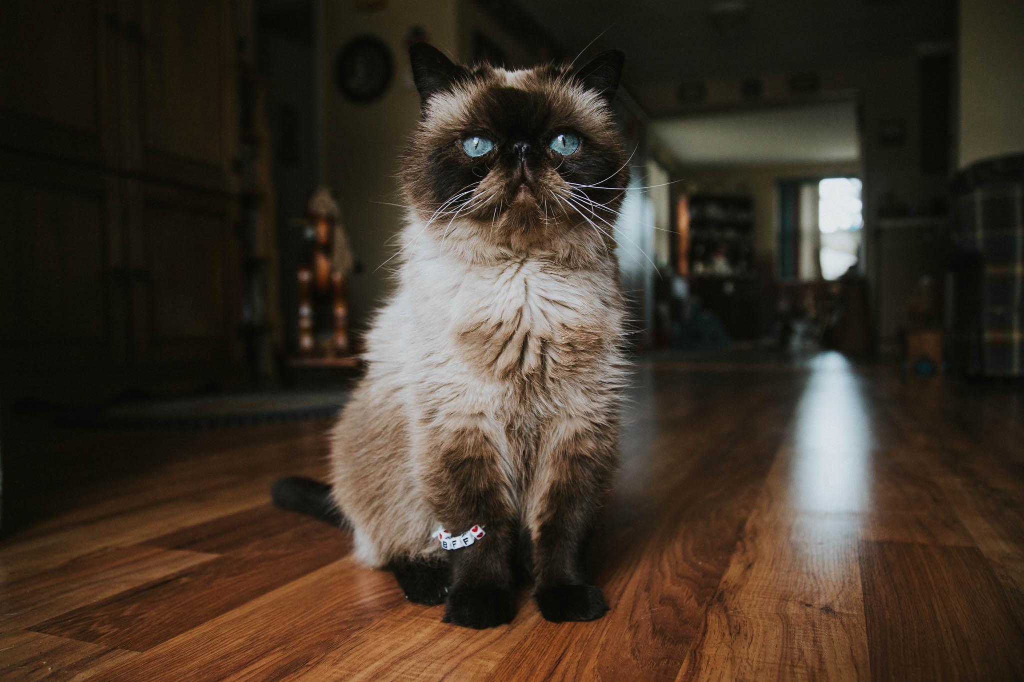 World Of Pets IV