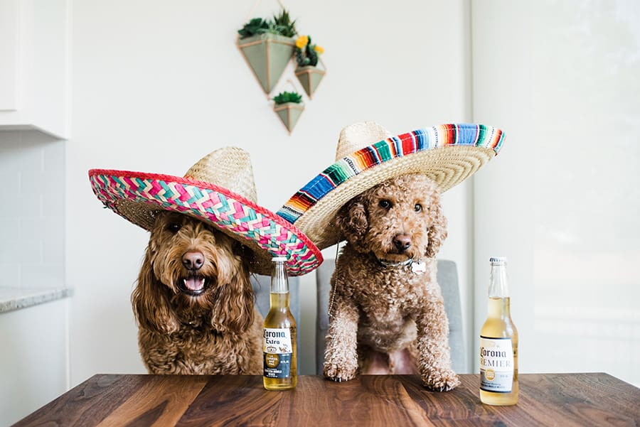 Two dogs wear sombreros and enjoy two beers