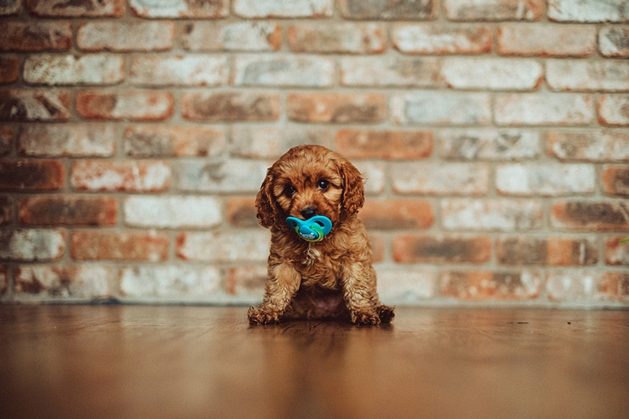 A dog sits in front of a brick wall and has a pacifier in his mouth.