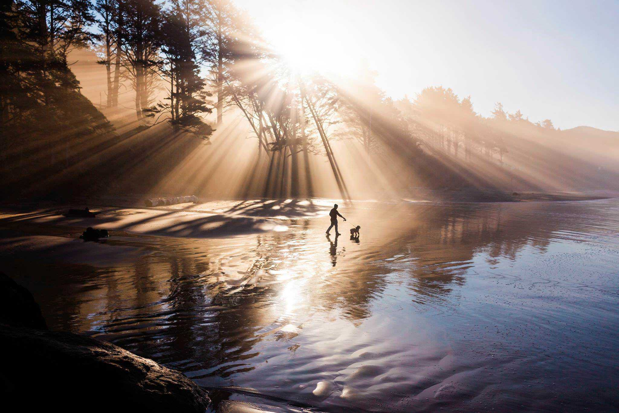 A man is walking with his dog at a beach while the sunbeams shine through the trees.