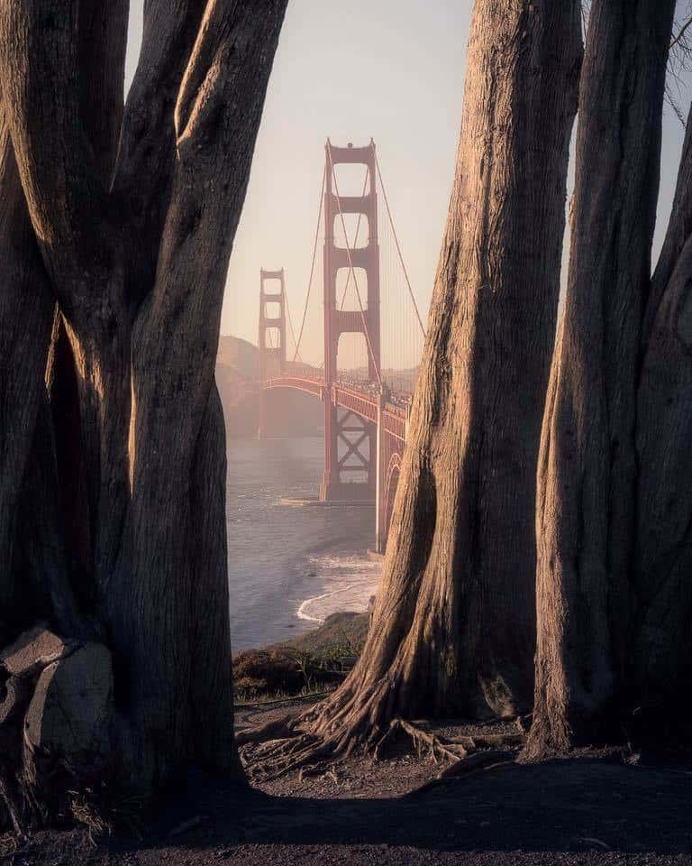 Looking amid of trees on the Golden Gate Bridge in San Francisco