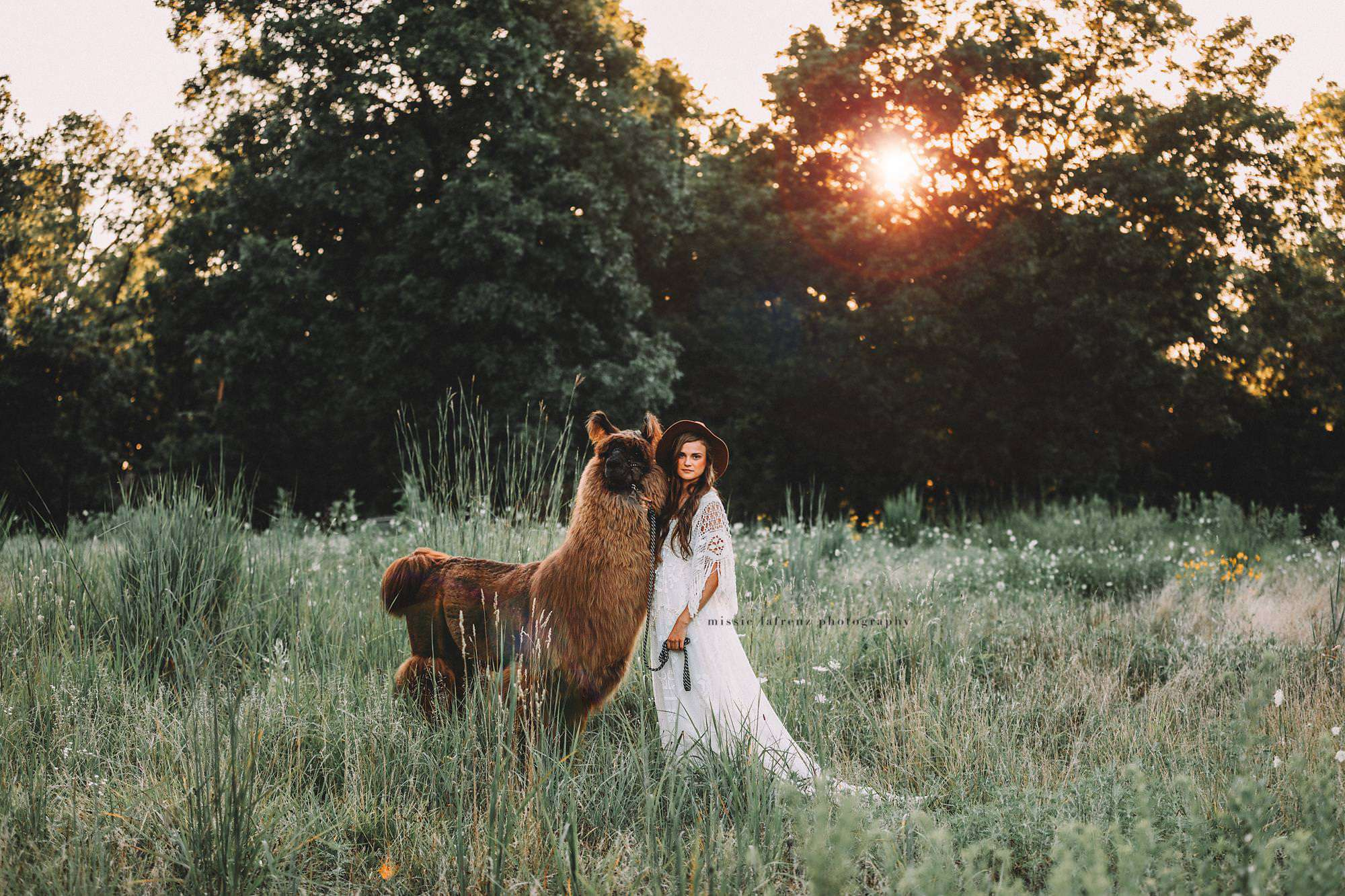 An alpaca is holding by a woman on a field