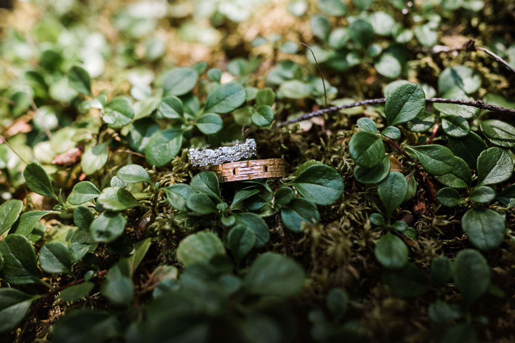 Detail shots of the wedding rings which are lying among cloverleafs
