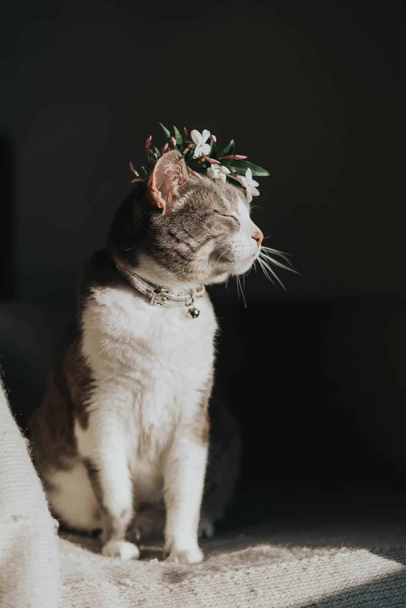 majestic cats