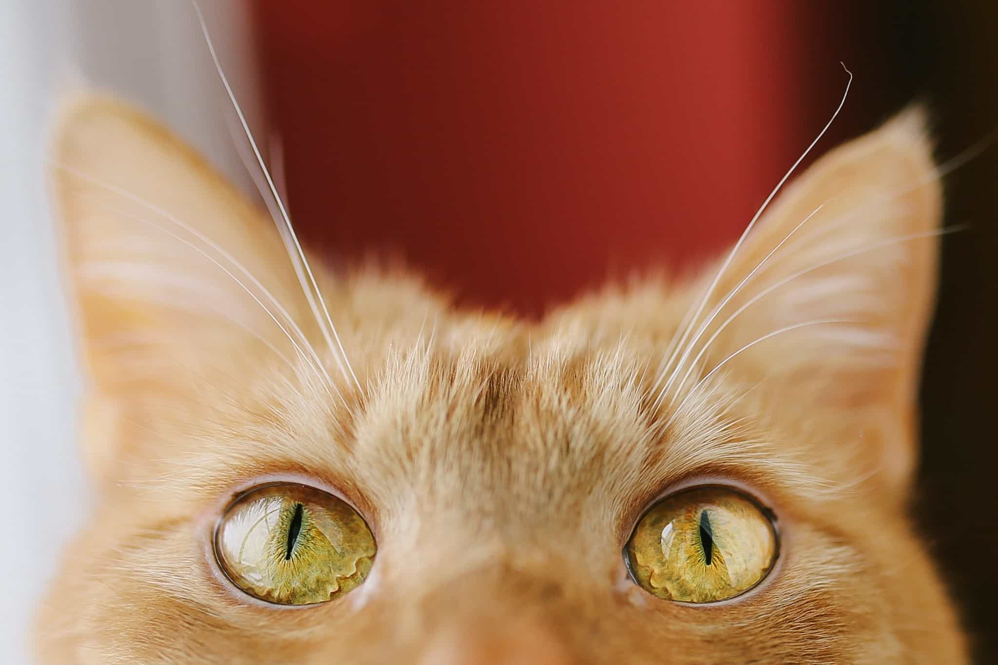 Amazing Cat Portraits You're Going To Love For Sure