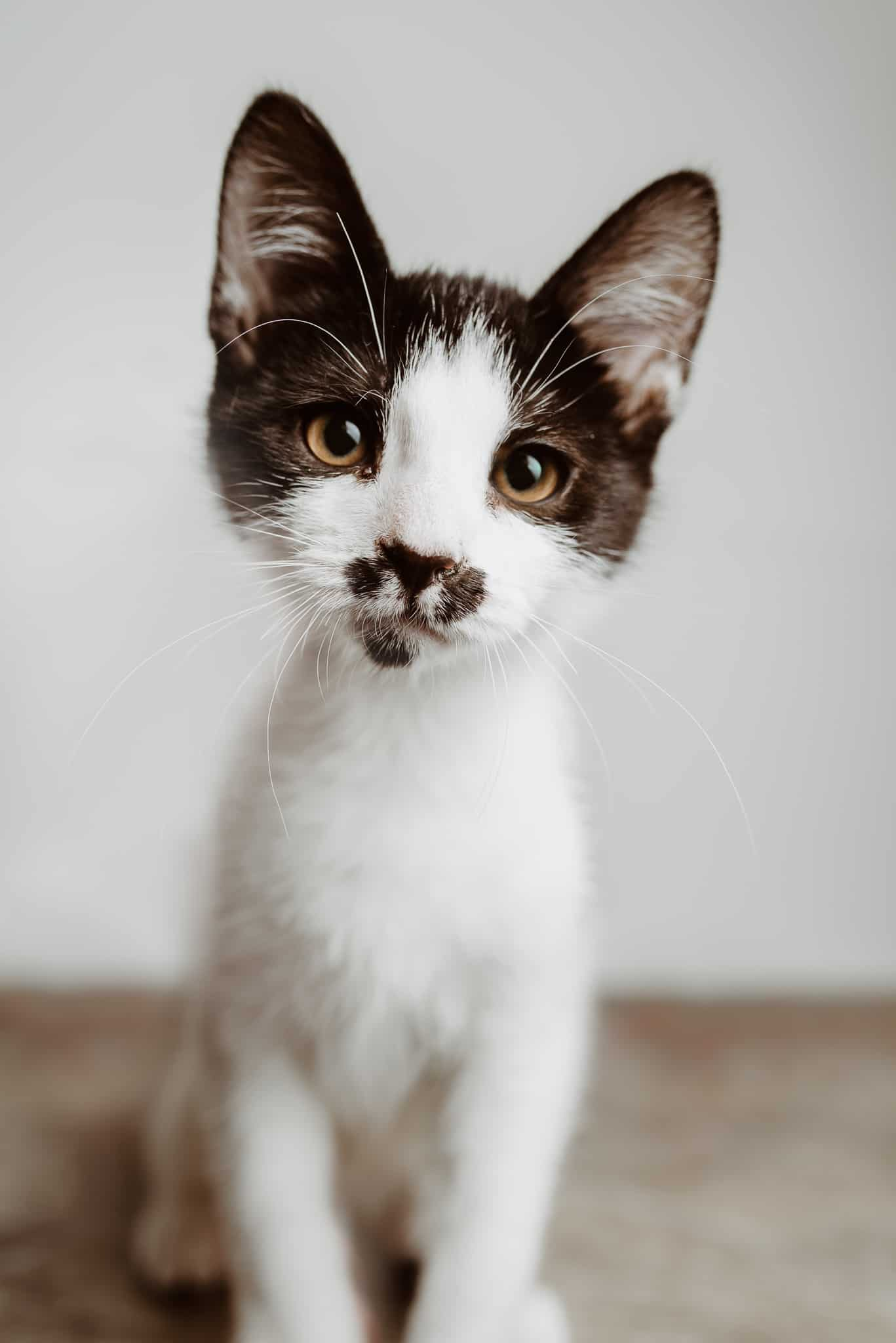 Cute Kitten Pictures
