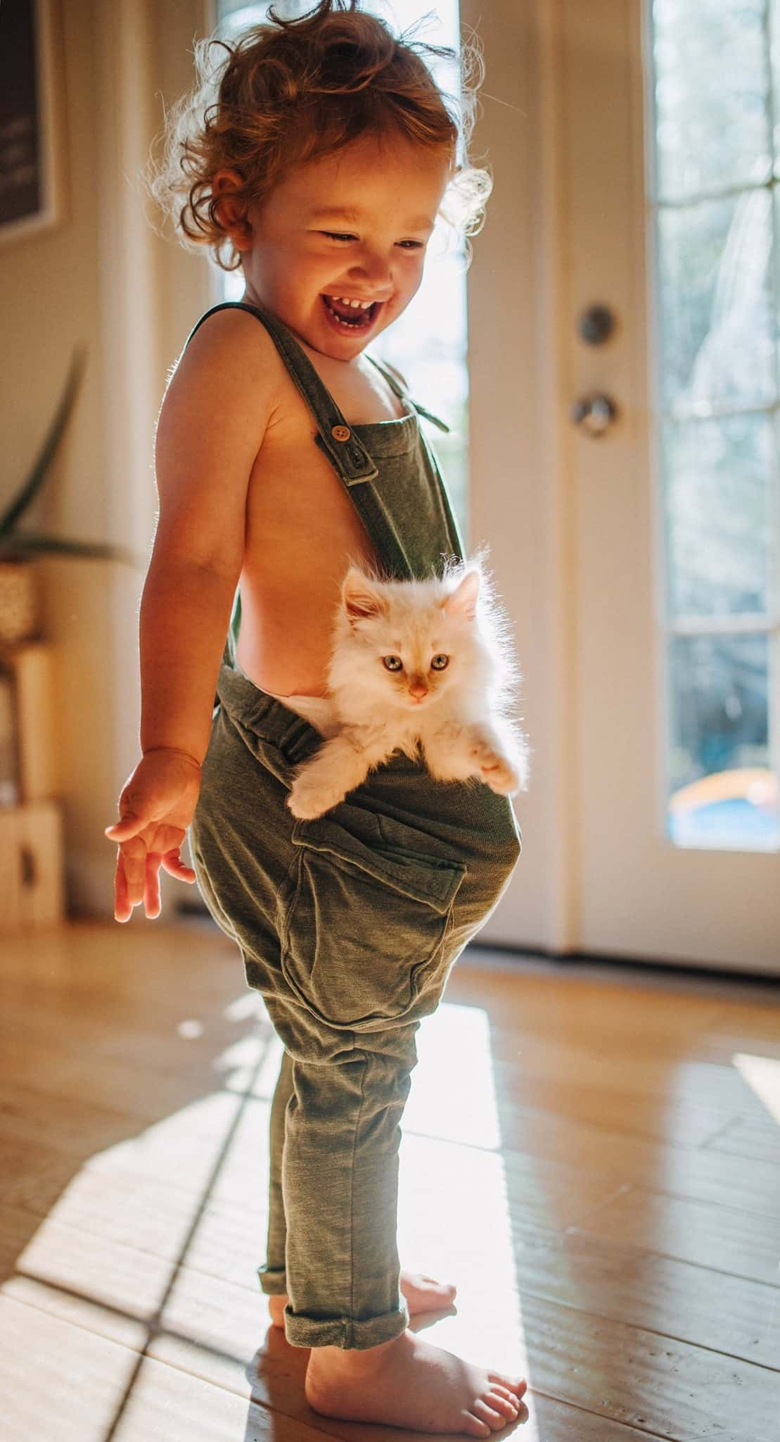 14 Cute Kitten Pictures That Will Put A Smile On Your Face