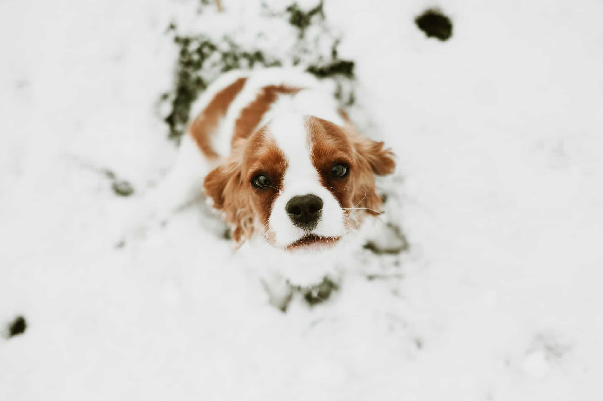 Amazing Snow Photos That Show The Magic Of Winter Season