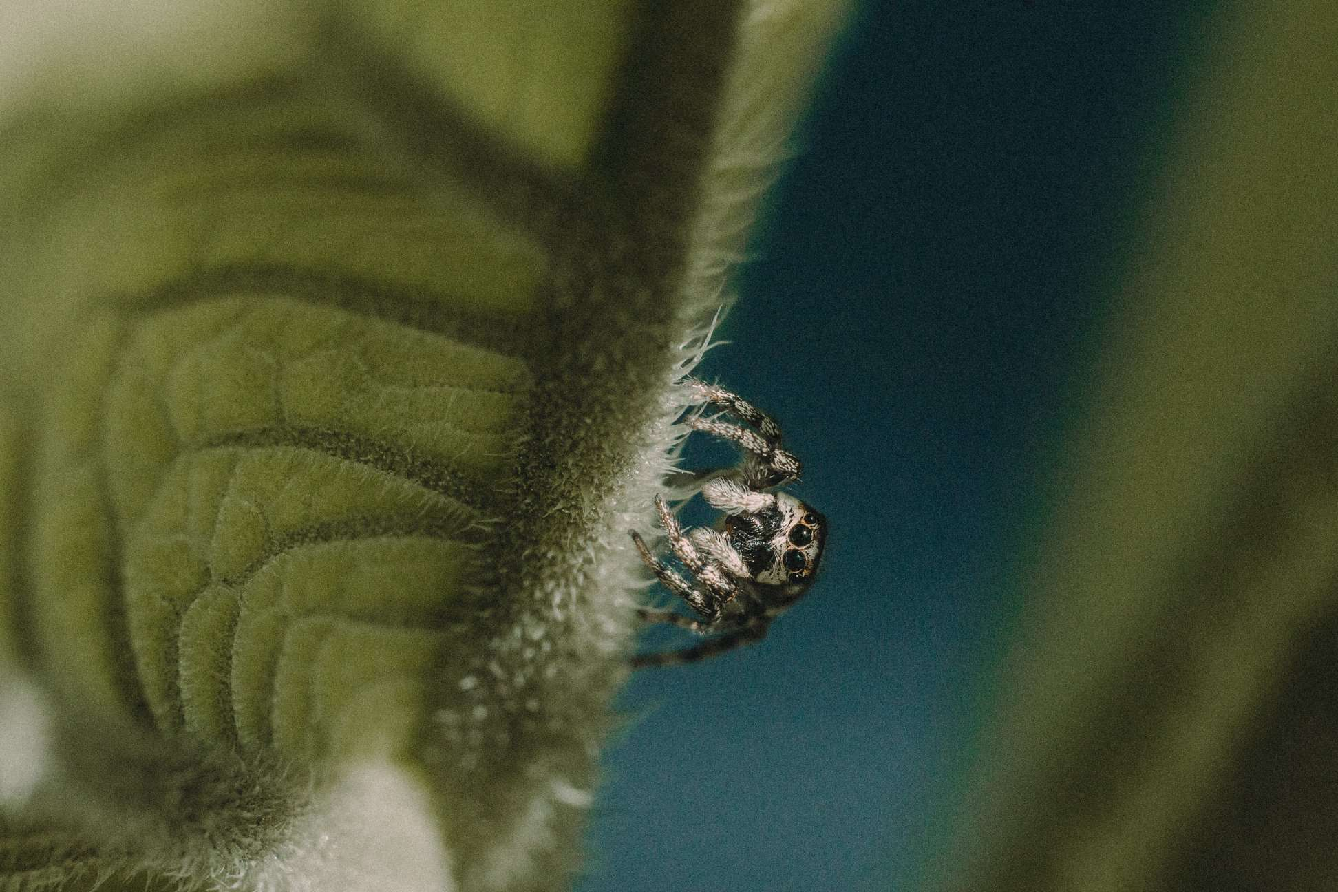 Fascinating Macro Photography Ideas That Will Inspire You