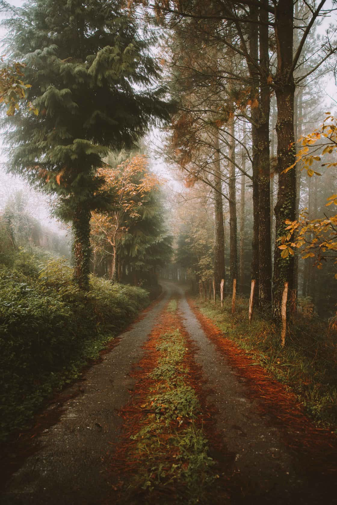 a beautiful image of a street in a forest