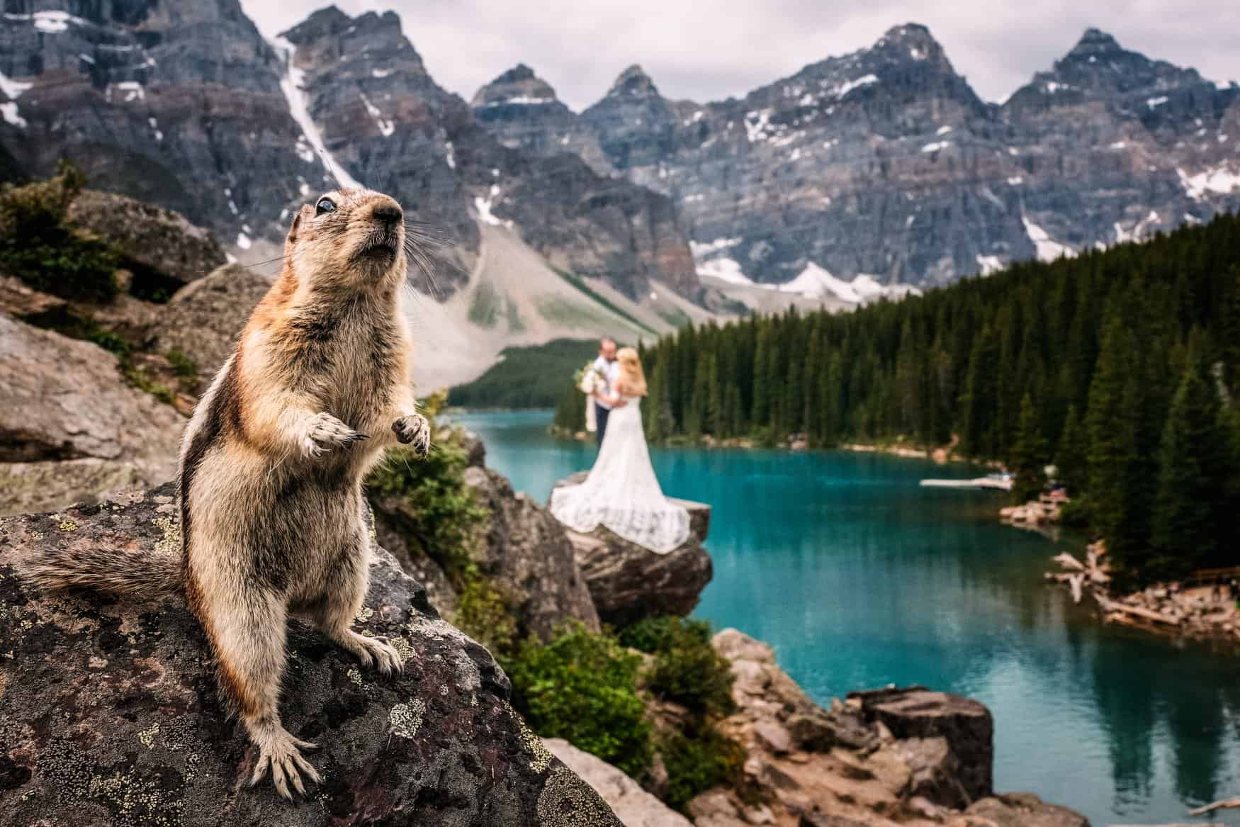 The Very Best Photos Of Beautiful Animals In 2019