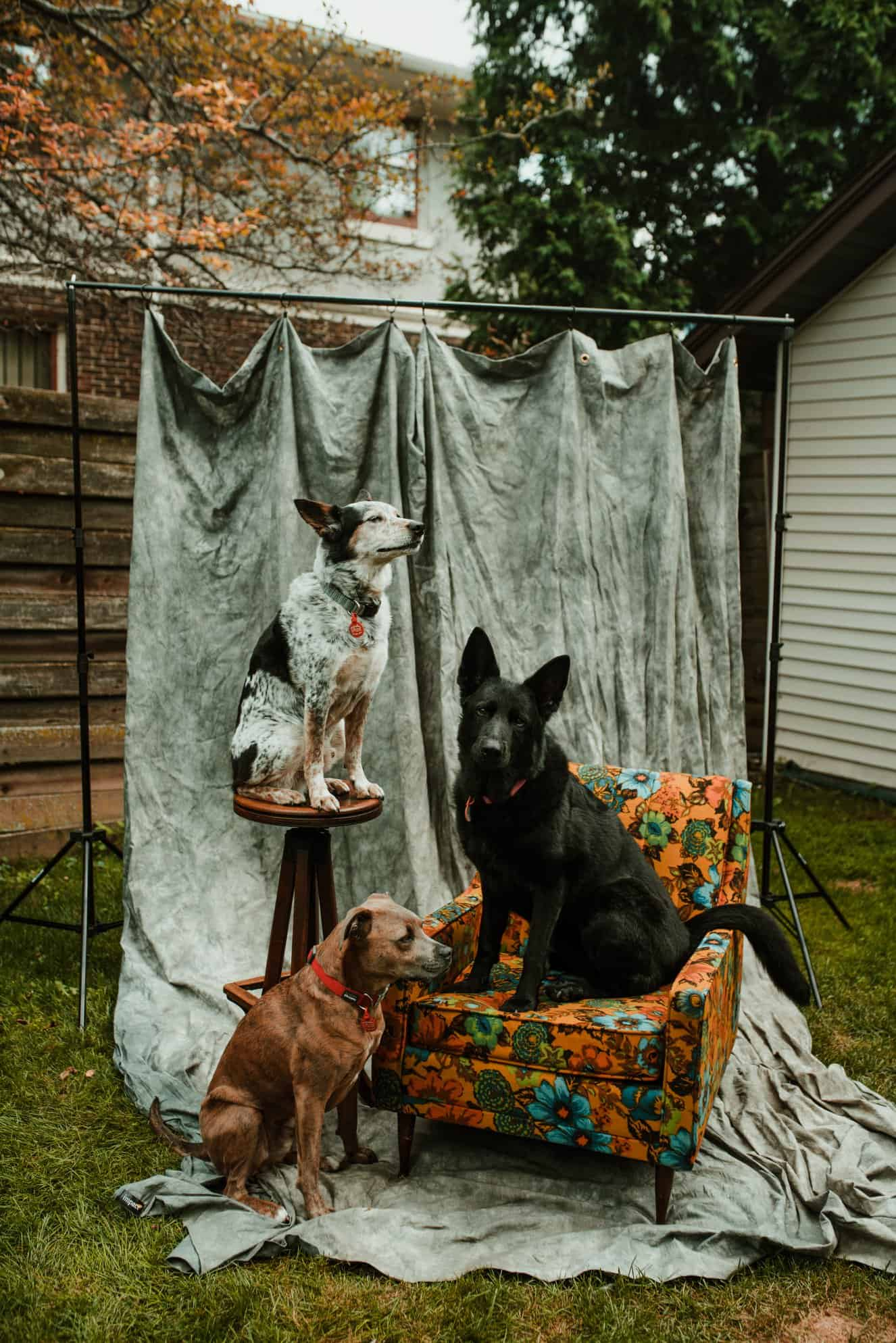 dogs are beautiful animals, these ones are posing in the backyard garden