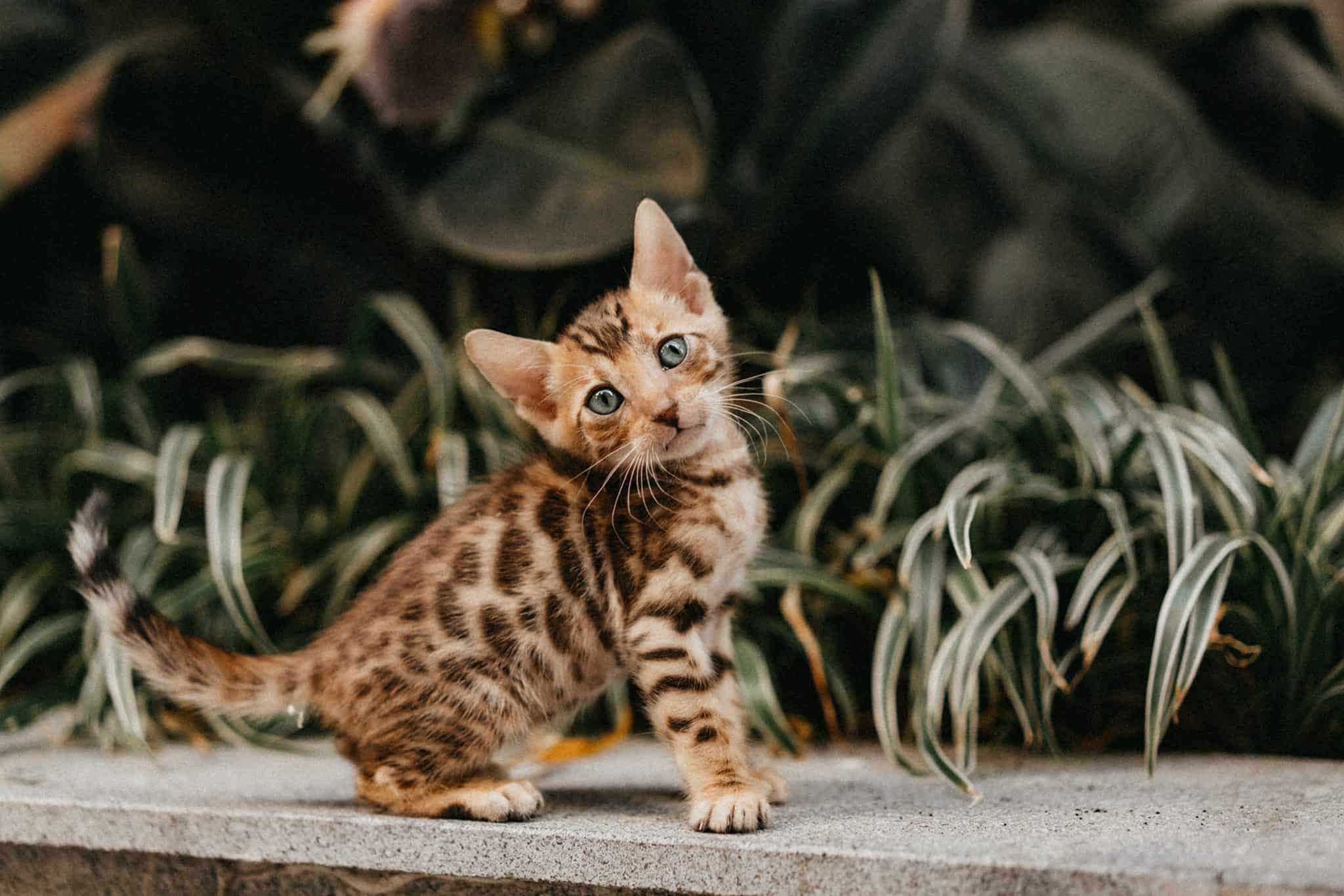 kittens are beautiful animals, this one is a tiger cat waiting sitting in a garden