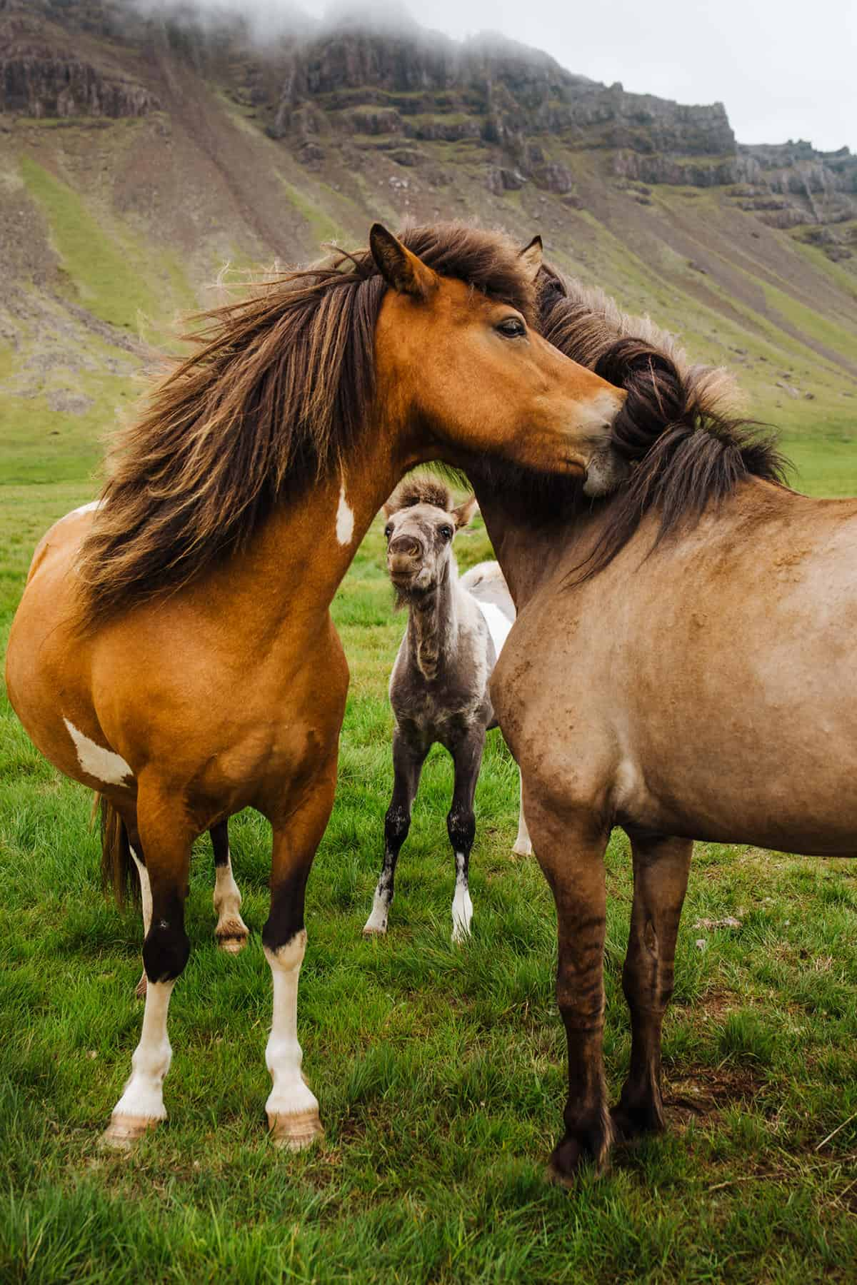 57 Outstanding Photos Of Beautiful Animals