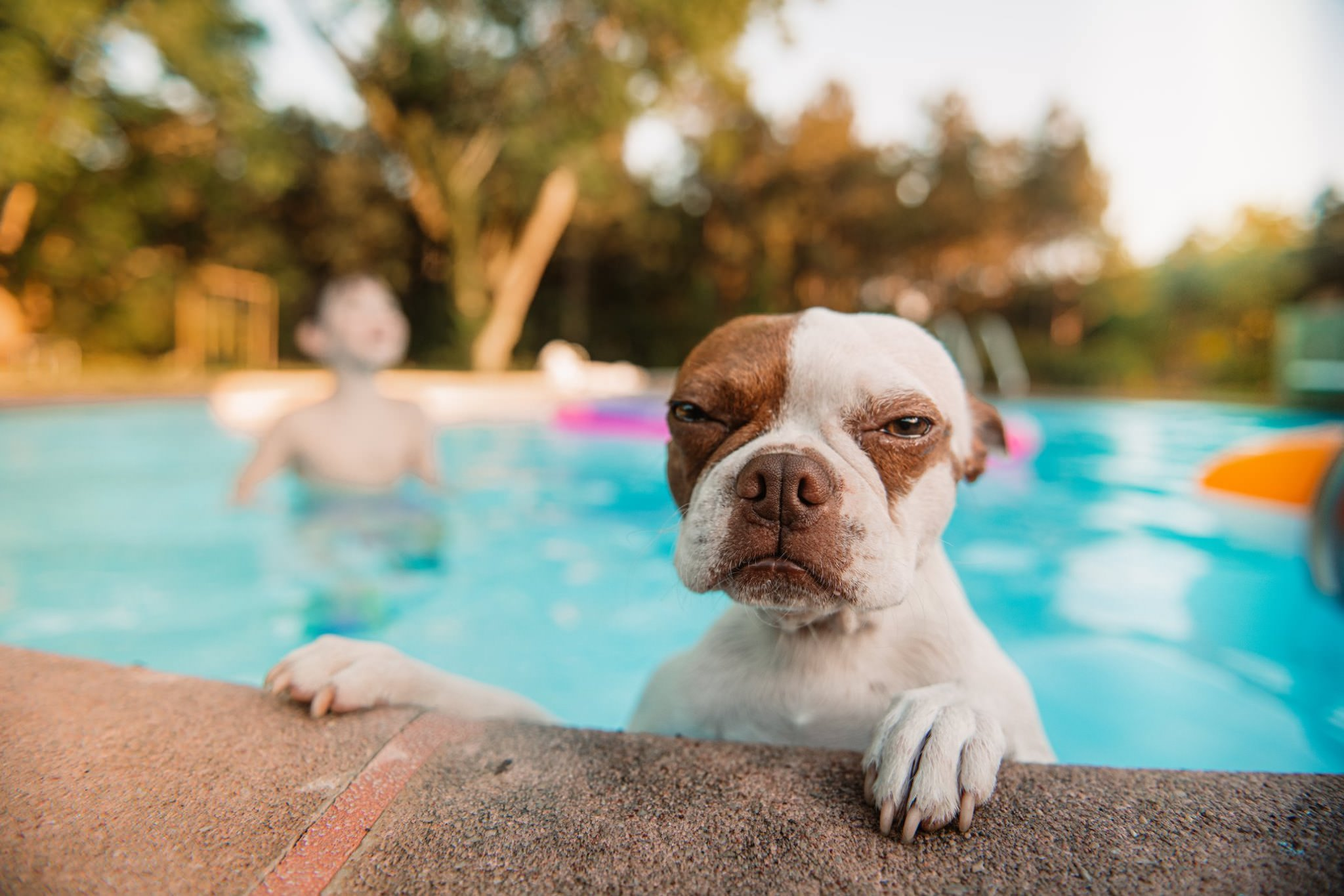 a dog in a pool looks straight into the camera and seems to angry