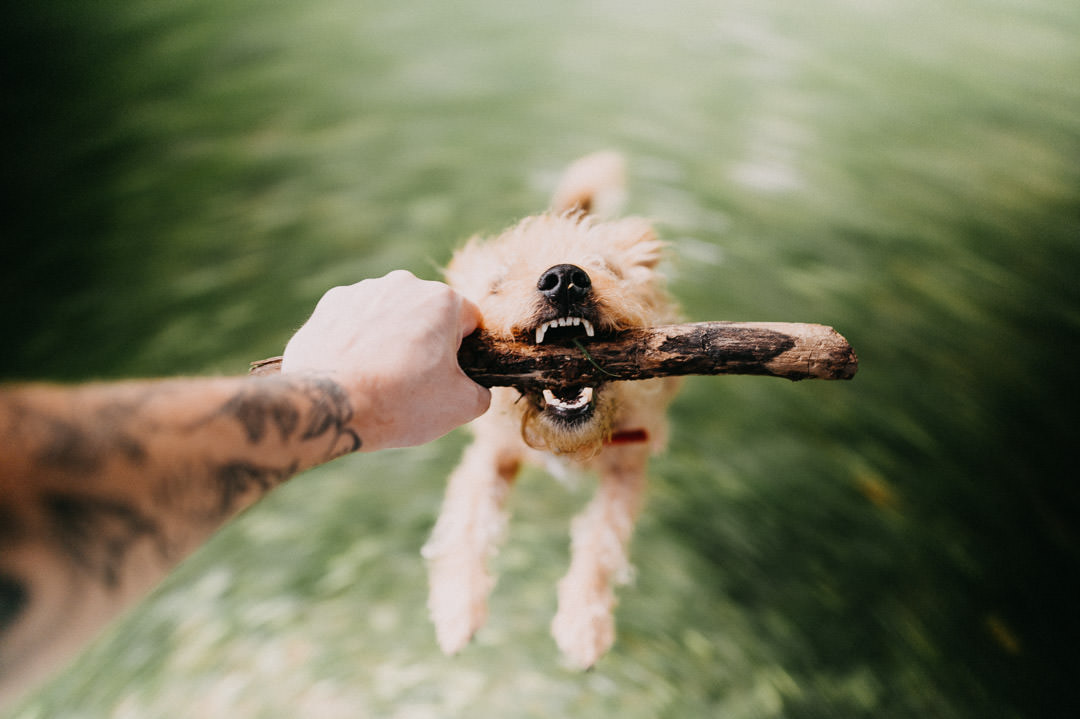 a dog with a stick in his mouth while he gets spun around