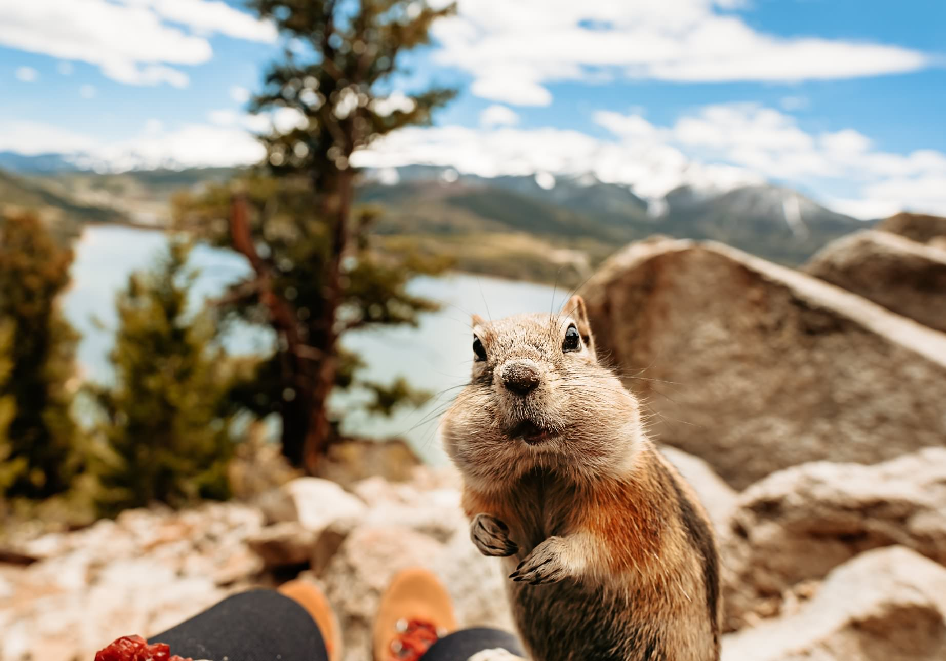 a chipmunk eats a fruit and looks surprised
