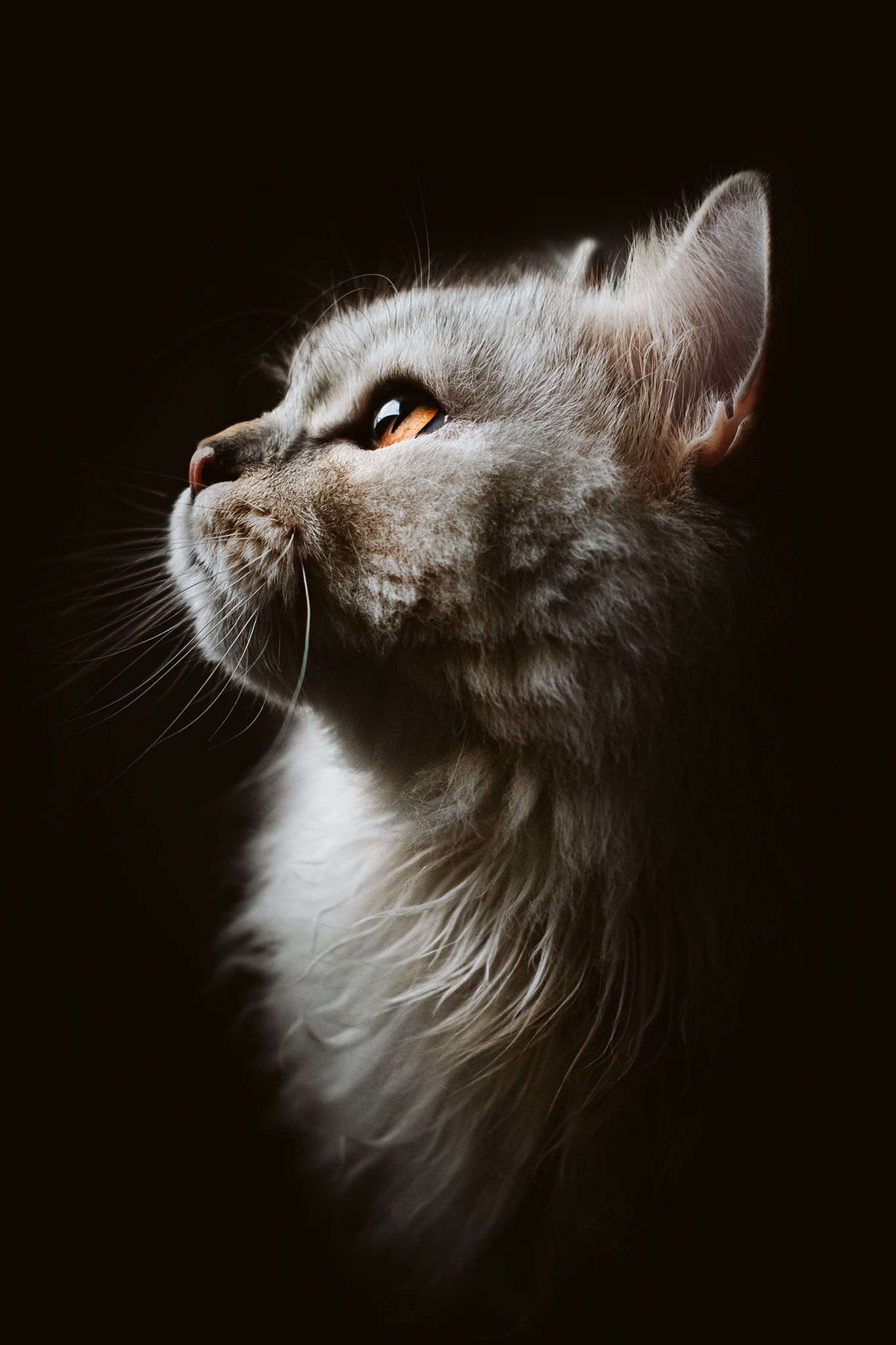 a majestic cat looks into the light