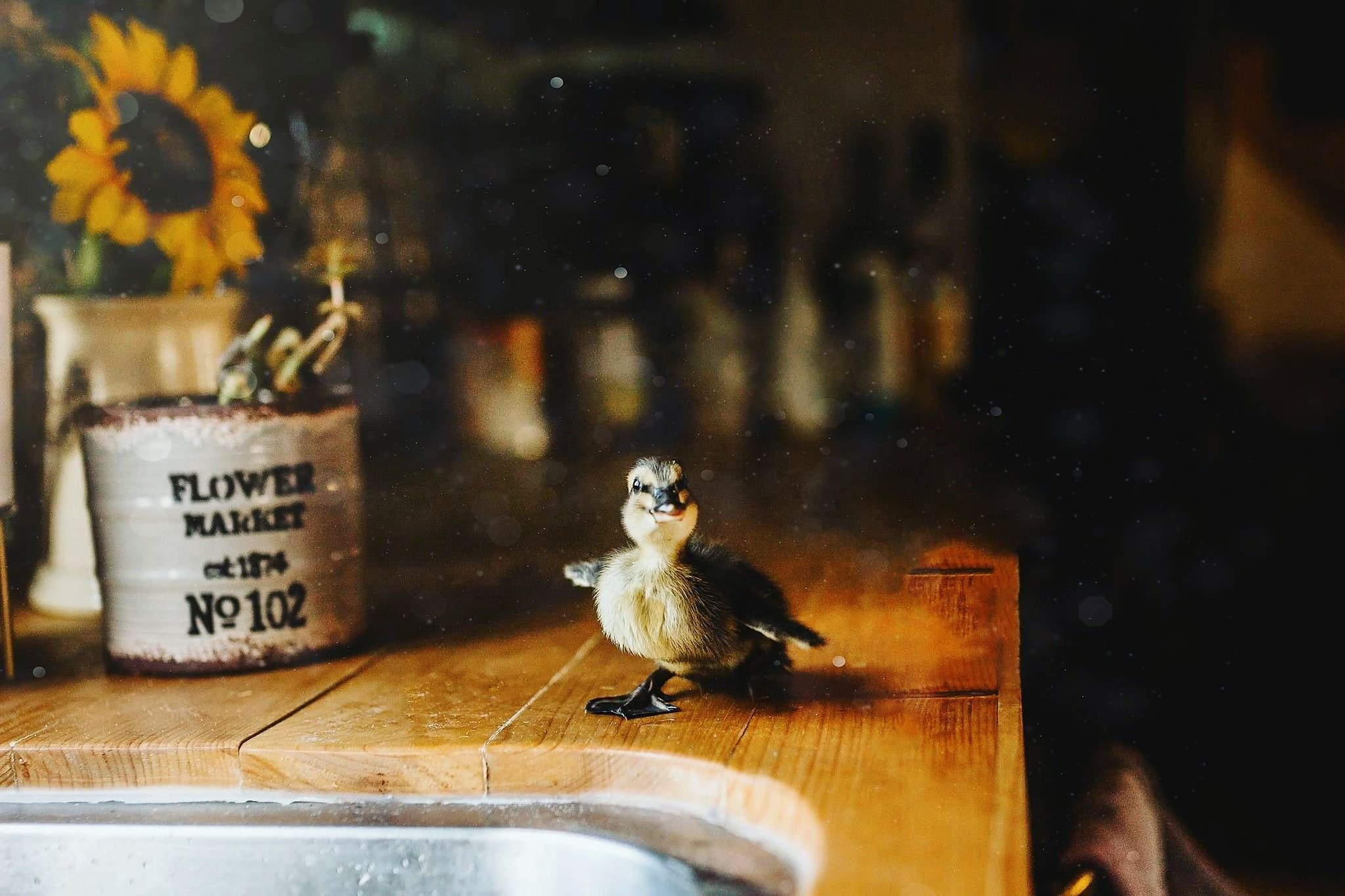a small duck stands next to a sink in the kitchen