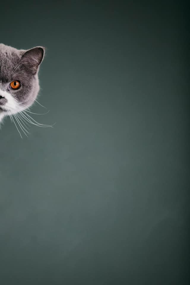 a cat sneaks in from behind a wall so that you only see half of the cat's face.