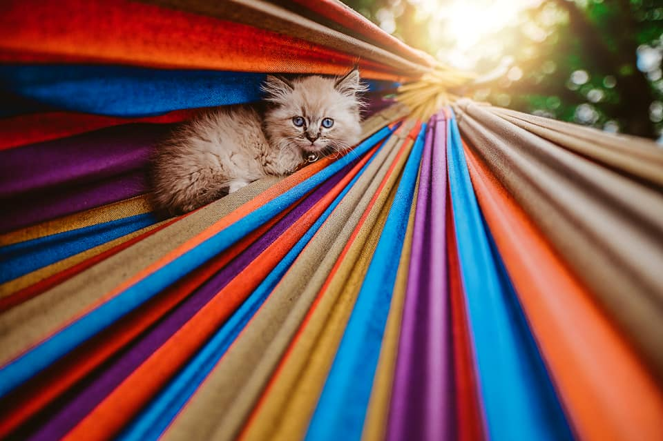a cat lies in hammock on a sunny day