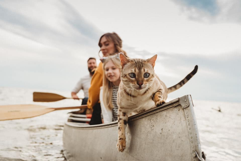 a slightly cross-eyed cat is leading the way in the family's boat