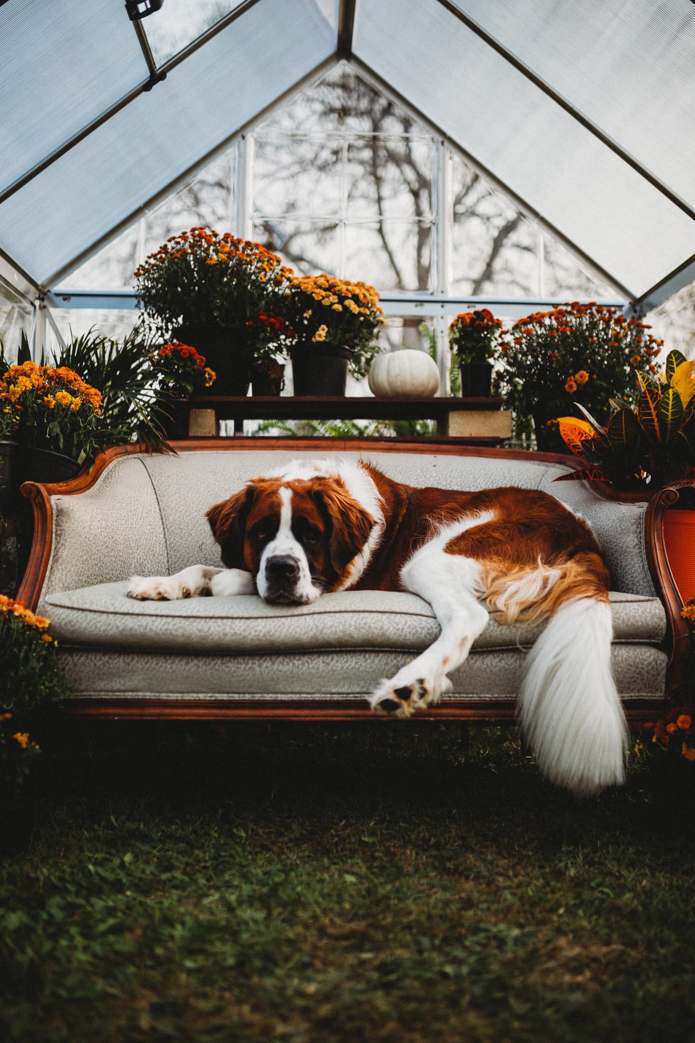 a dog chills on a couch in a greenhouse