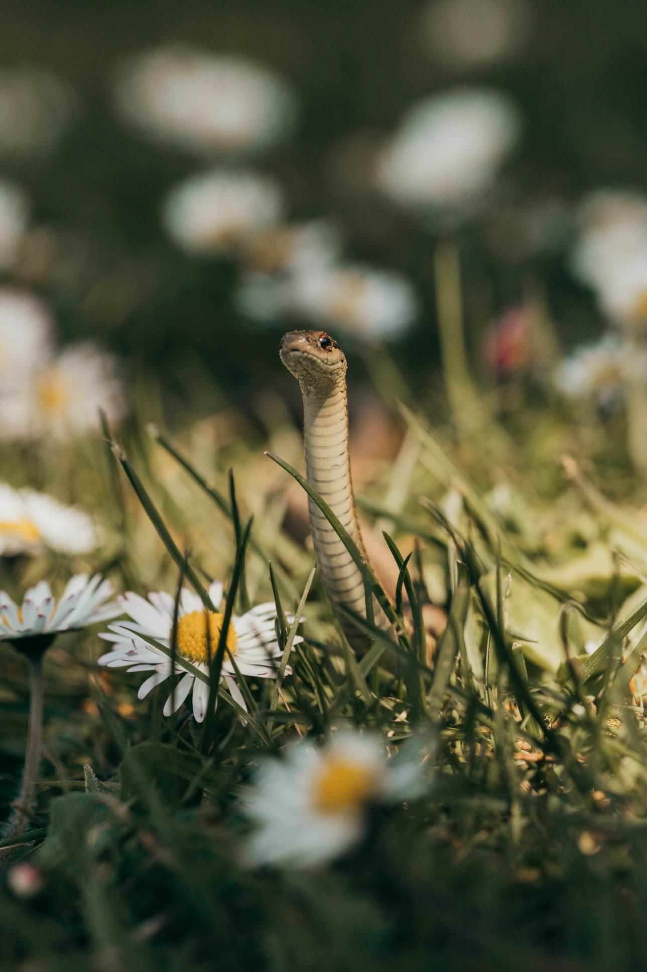 a snake in the garden
