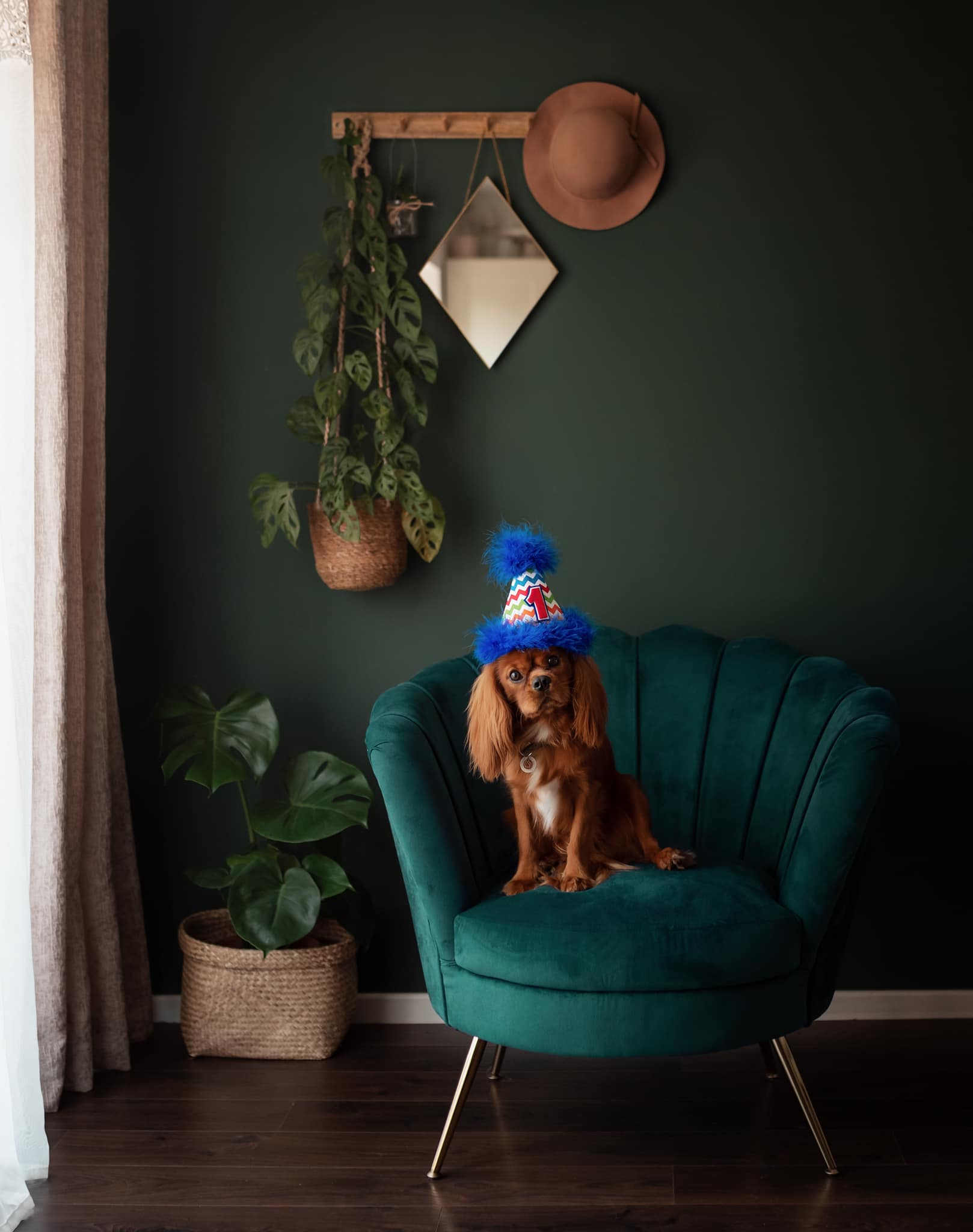 a dog with a birthday hat sits on a armchair