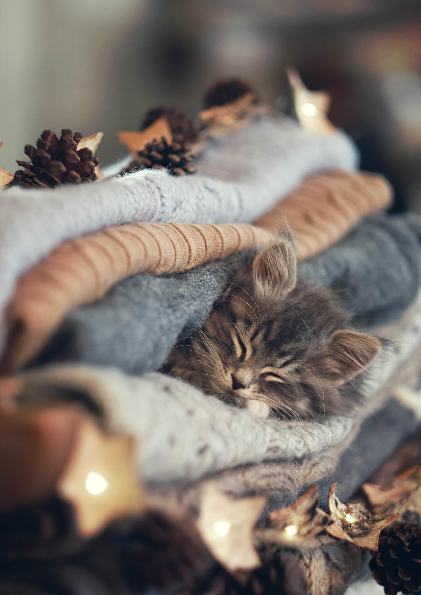 a kitten sleeps in a sandwich of blankets