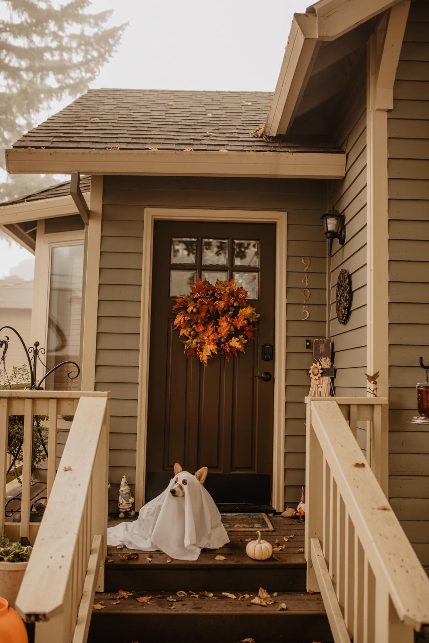 a corgi dressed as a ghost sits on the porch