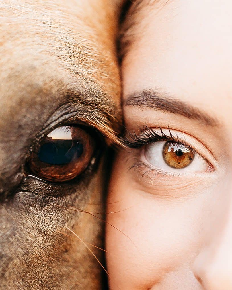 the eye of a horse and a woman are right next to each other