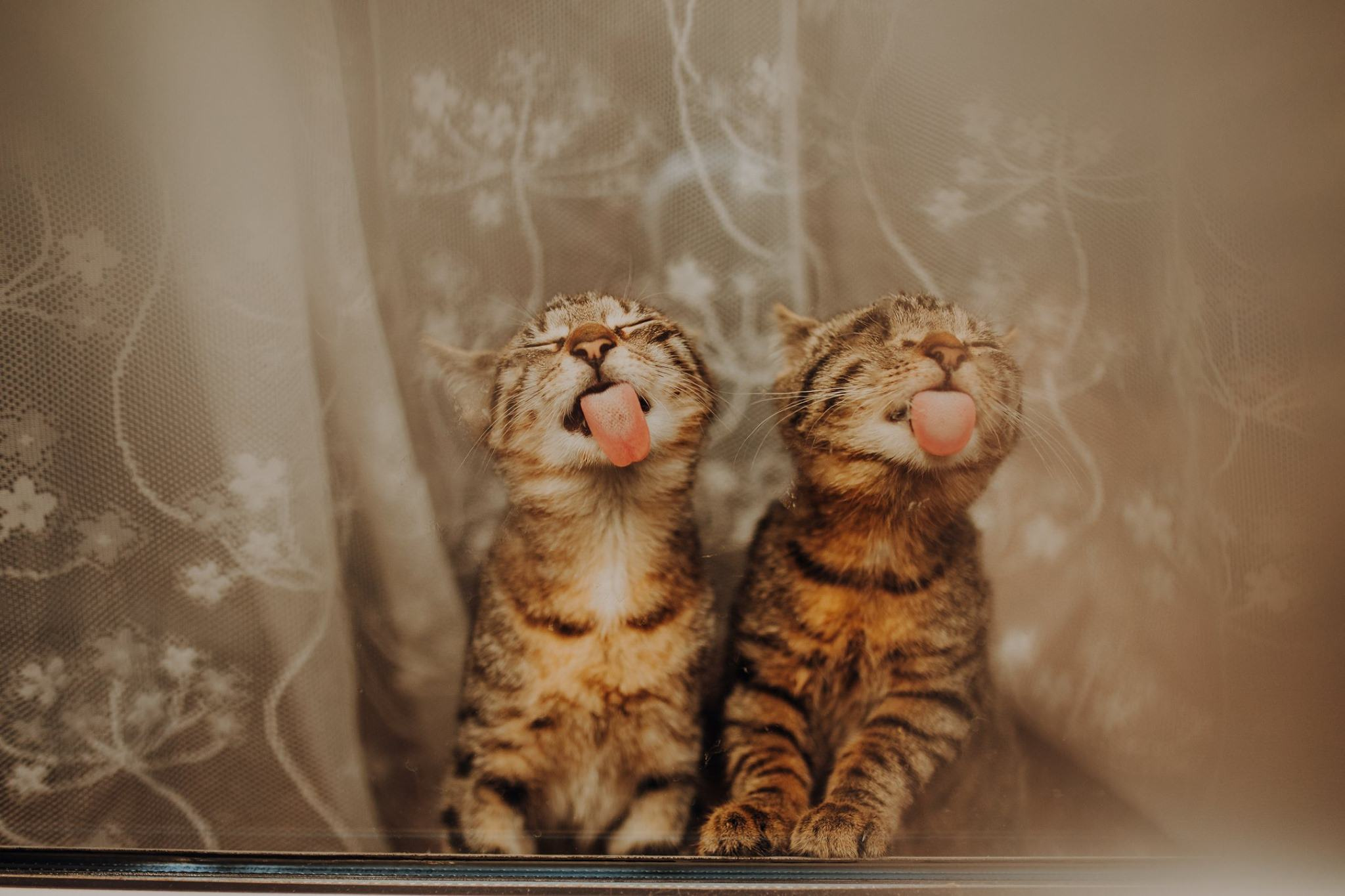 two kittens are licking the window glass