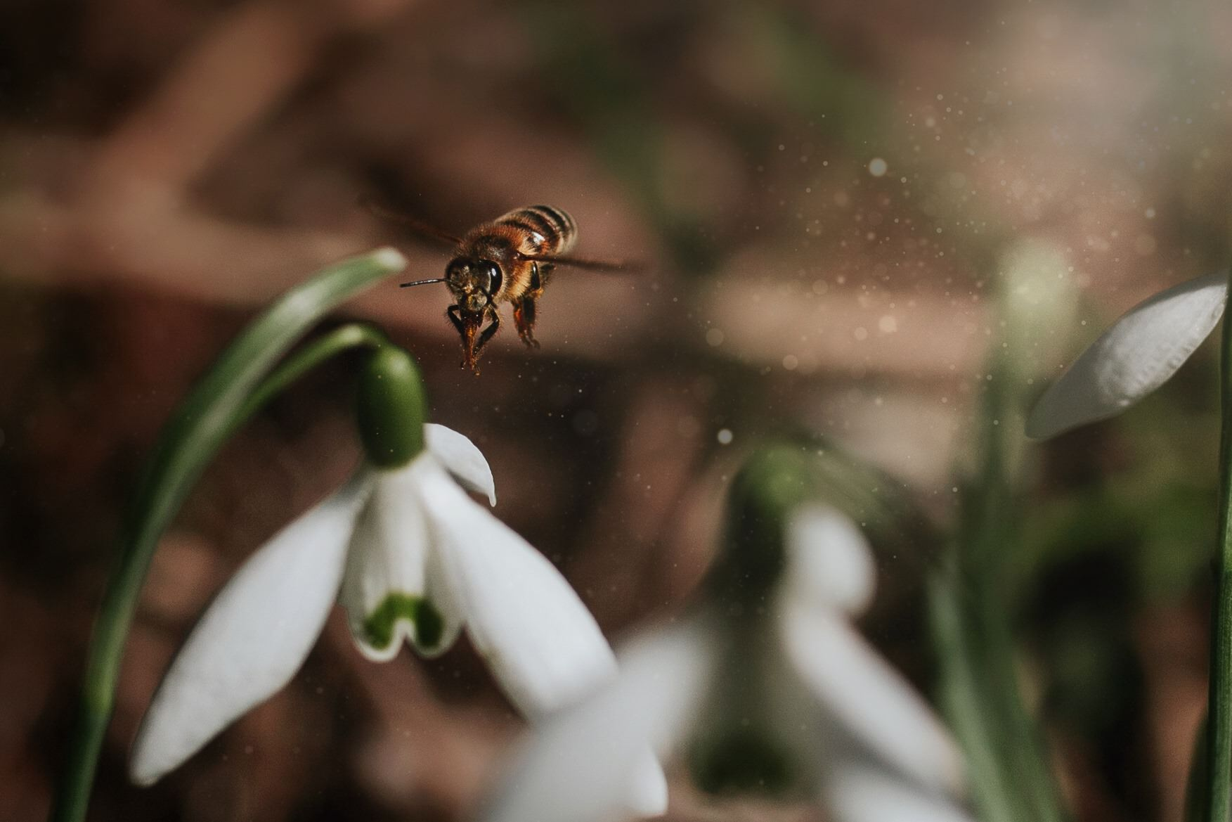 a bee flies from one flower to the next one