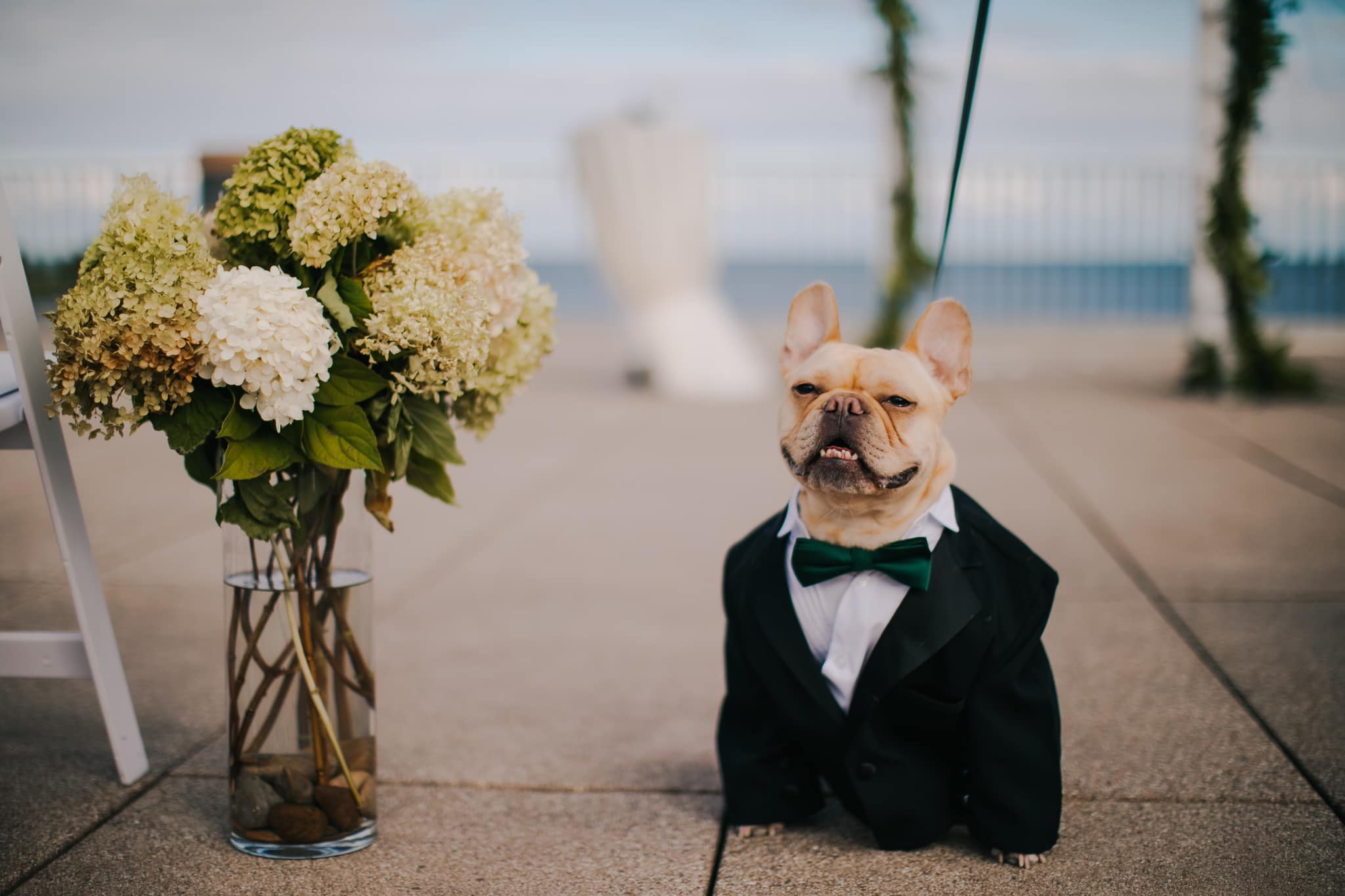 a french dog dressed in a suit is attending a wedding