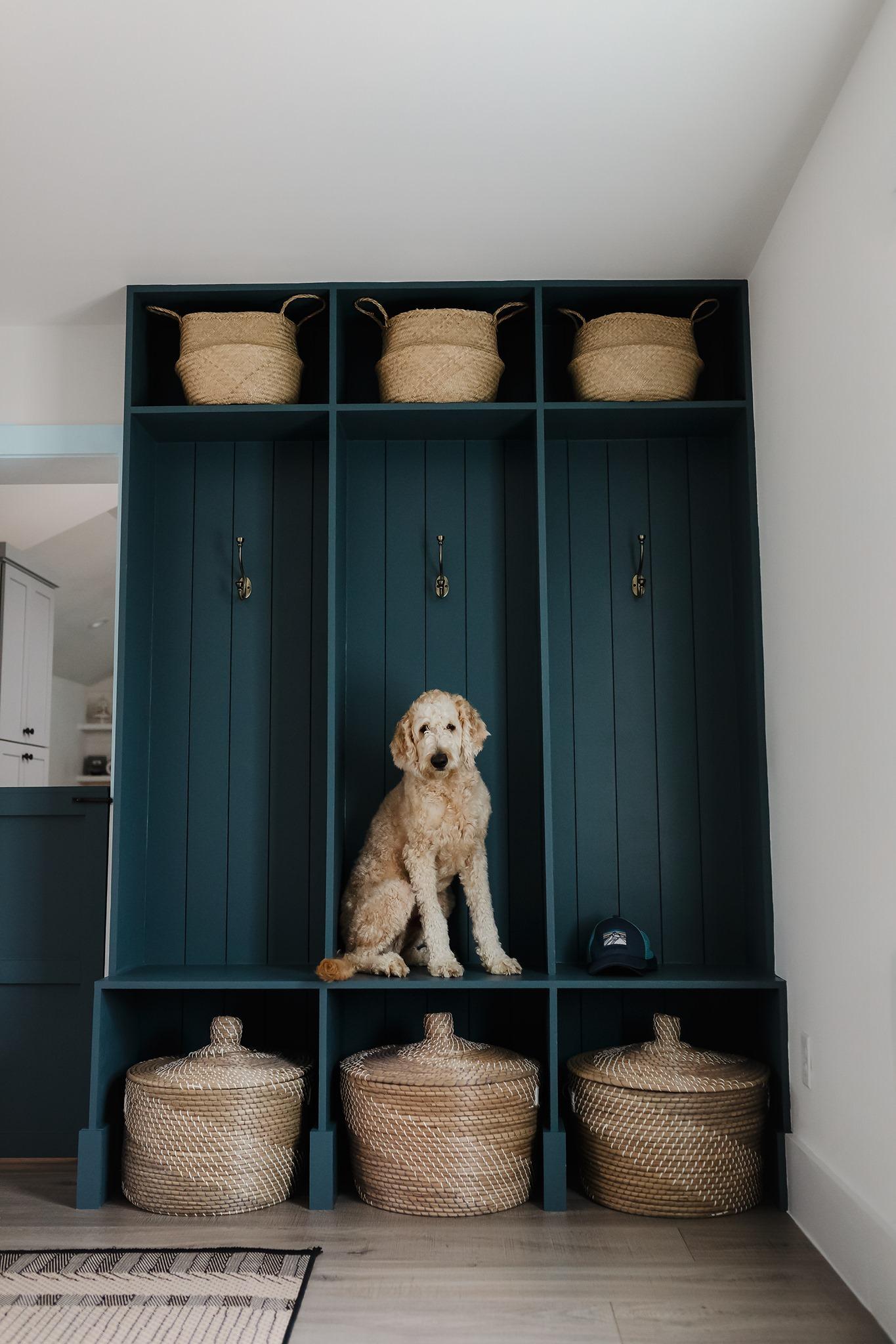 a poodle sits in a blue closet