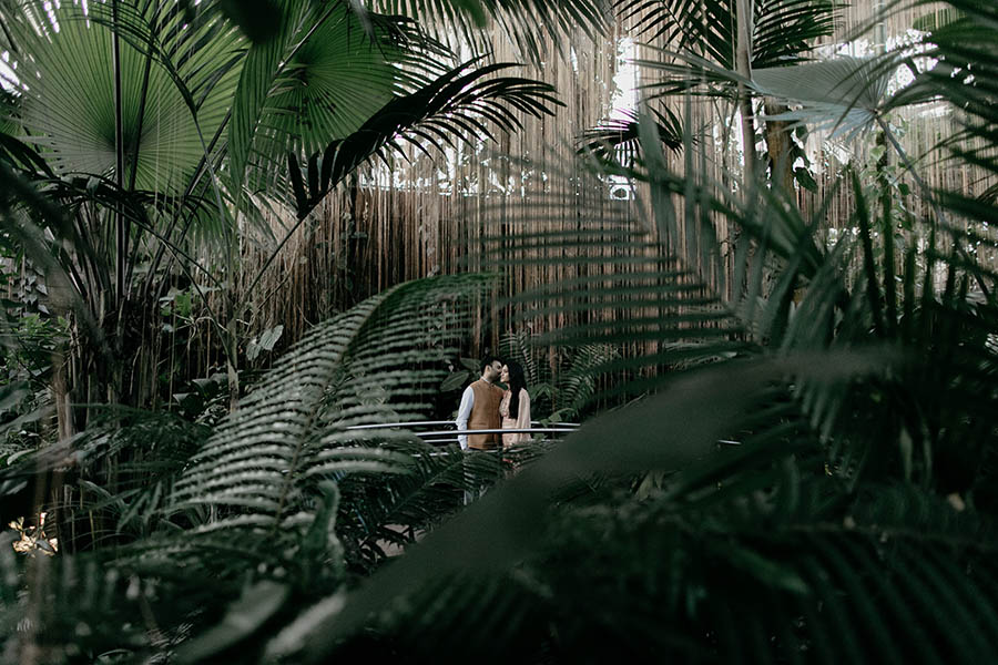 A wedding couple is standing in the botanical garden in Atlanta, in front of them are palms and ferns.