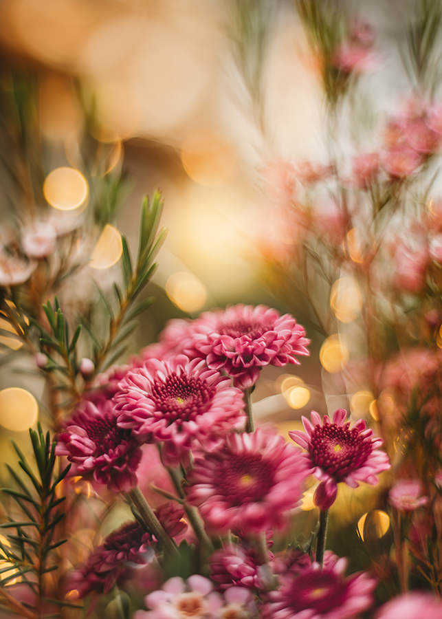 The Magic Of Flower Photography